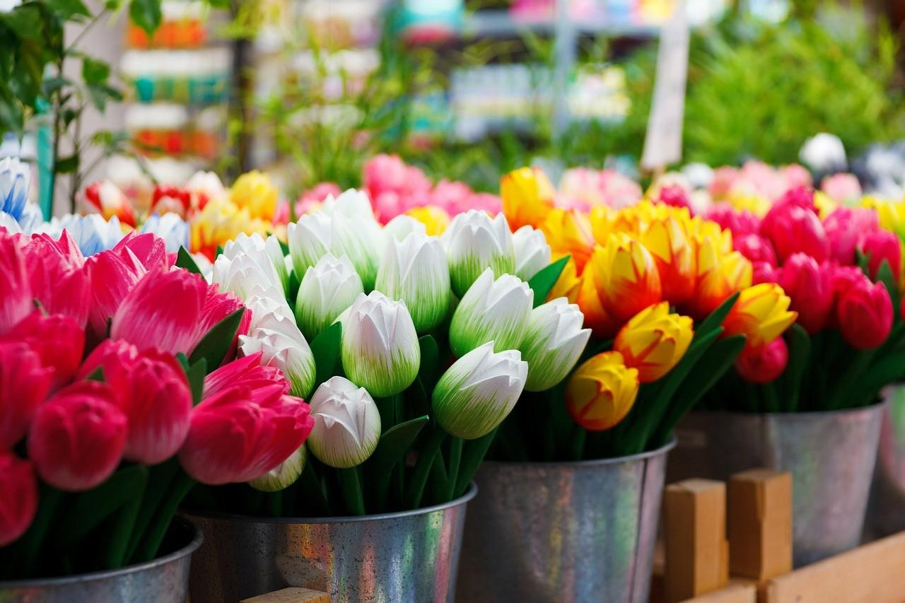 שופינג באמסטרדם שוק הפרחים